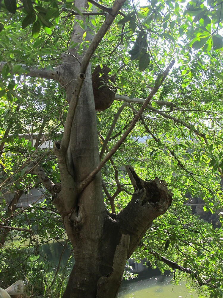 Tree with Termite Hill - Arbol con Termitas, Puerto Vallarta, Mexico by PtoVallartaMex