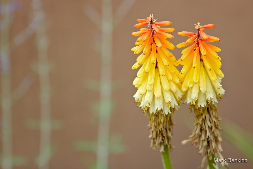 Fiery flower by Mark Bankins