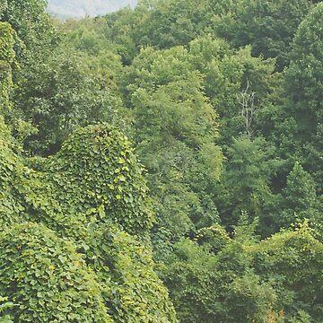 Green Wall de AmberRoques