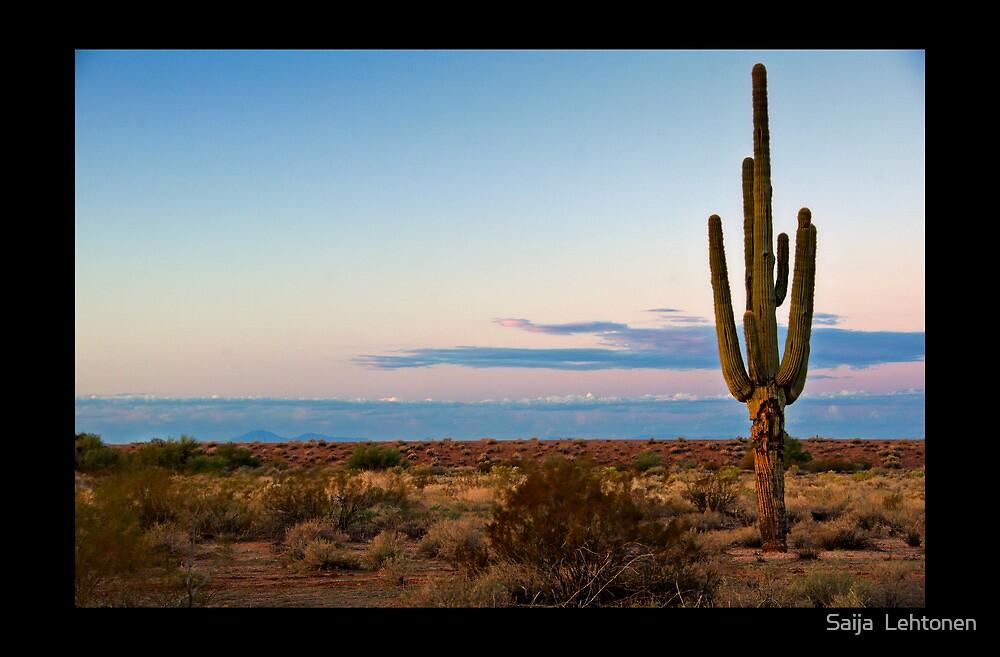 A Single Saguaro  by Saija  Lehtonen