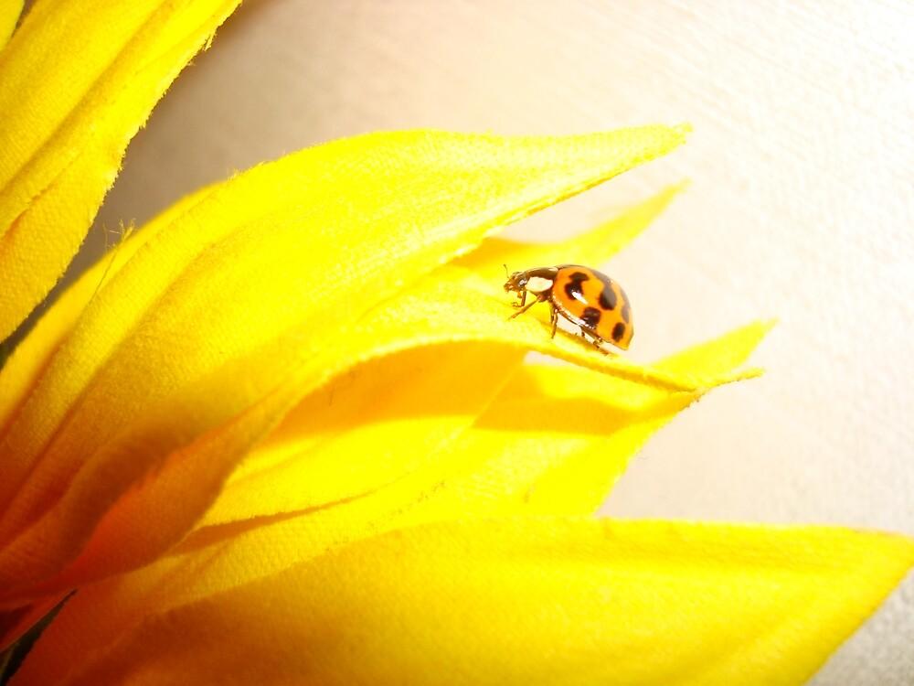 Bright Lady Bug on Petal by Christina Darcy