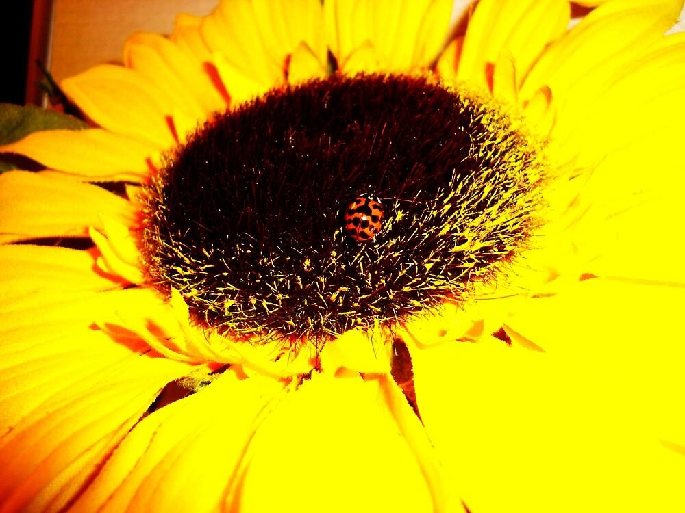 Lady Bug Sunflower Petal 3 by Christina Darcy