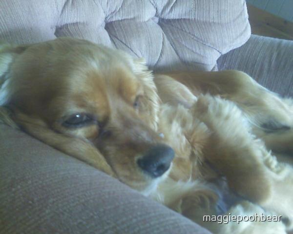 Precious Charlie by maggiepoohbear