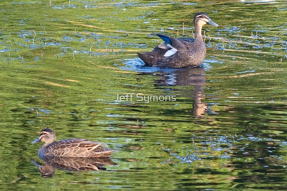 Ducks in the Frankston pond by Jeff Symons