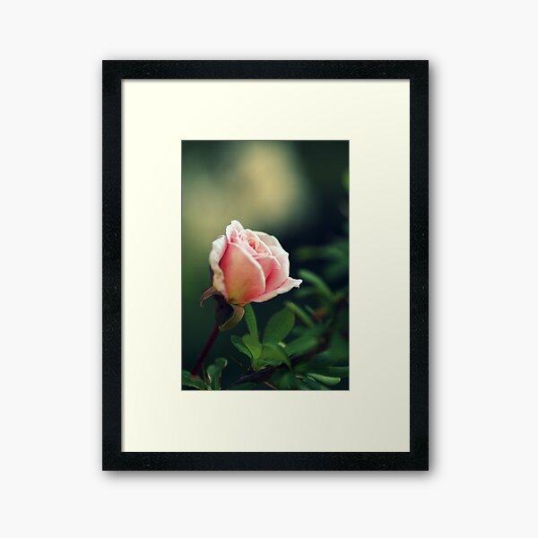 Compassion.... Framed Art Print