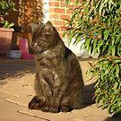 Tigga the Cat 5 by Jindia