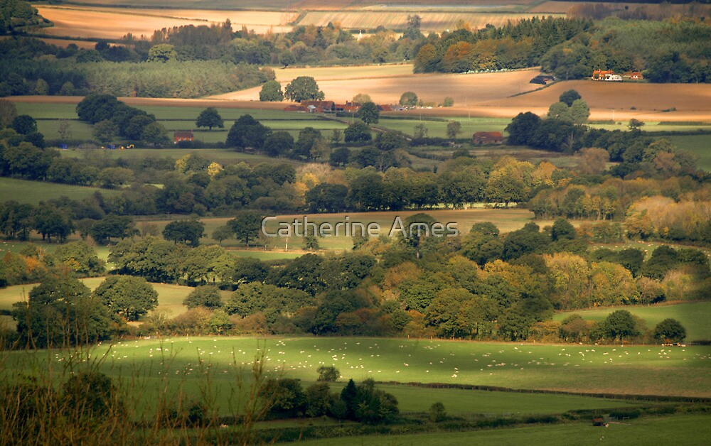 West Sussex Landscape near Elsted, UK by Catherine Ames