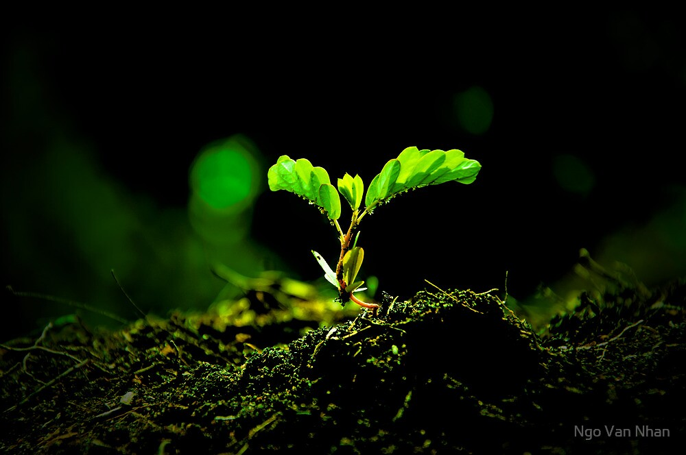 Green - new life by Van Nhan Ngo