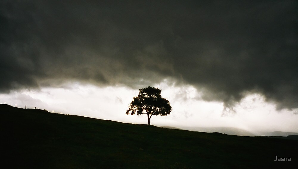 Lonely tree by Jasna