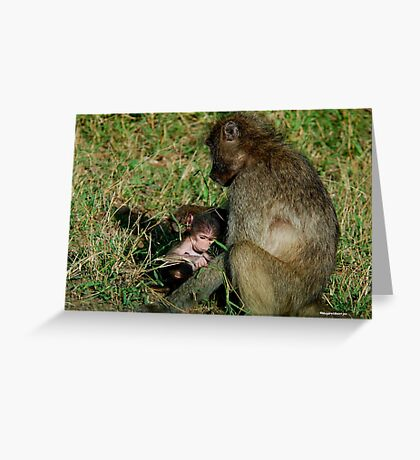YOU TICKLE MY EAR, I TICKLE YOUR LEG! - THE CHACHMA BABOON - Papio ursinus Greeting Card