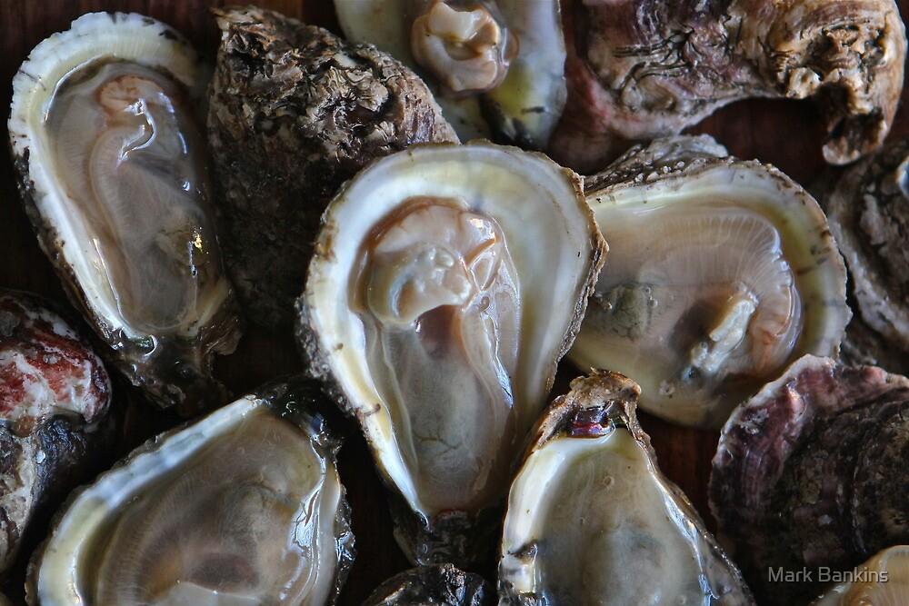 Oysters by Mark Bankins