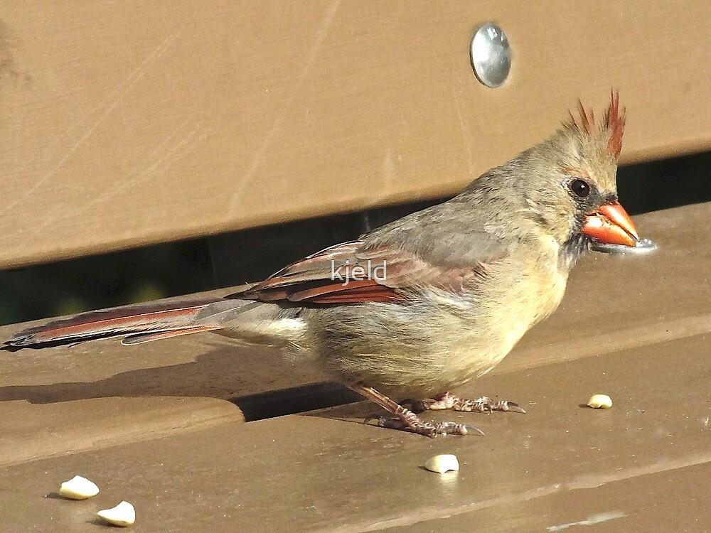 Northern Cardinal  Female by kjeld