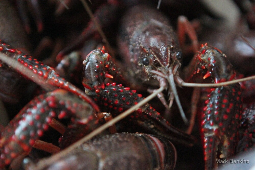 Crawfish #2 by Mark Bankins