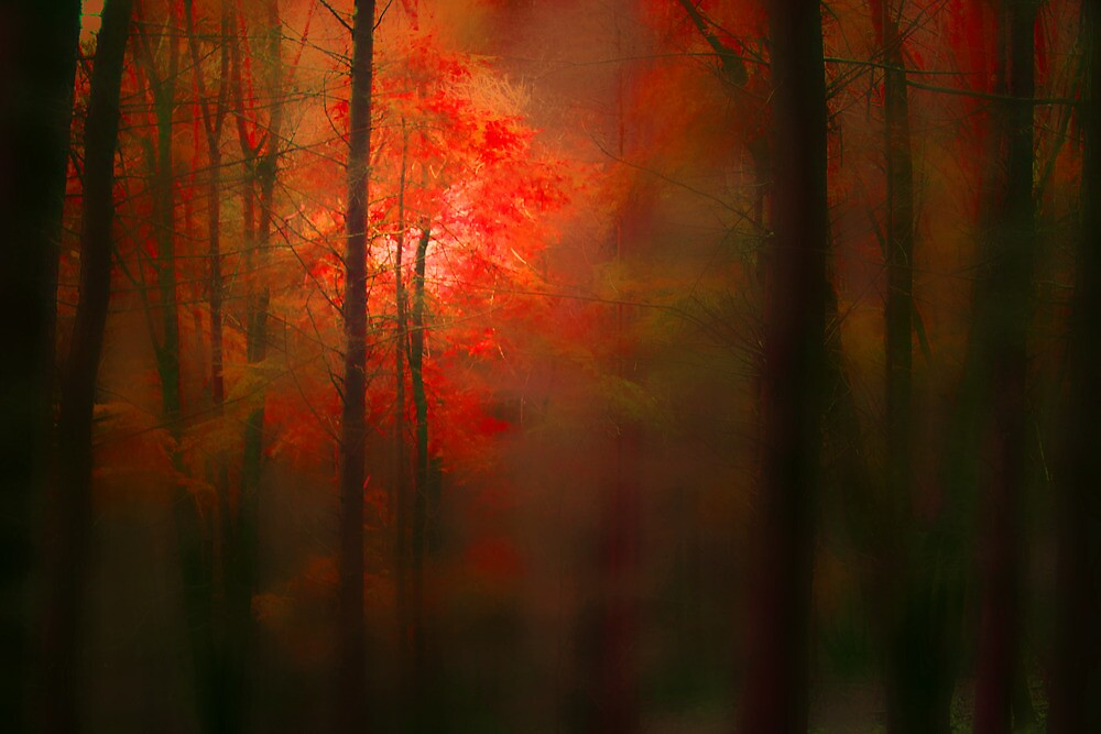 THE FOREST WHERE DREAMS ARE FOUND by leonie7