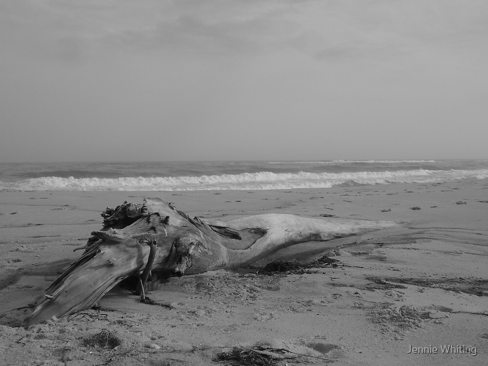 Driftwood on the beach by Jennie Whiting