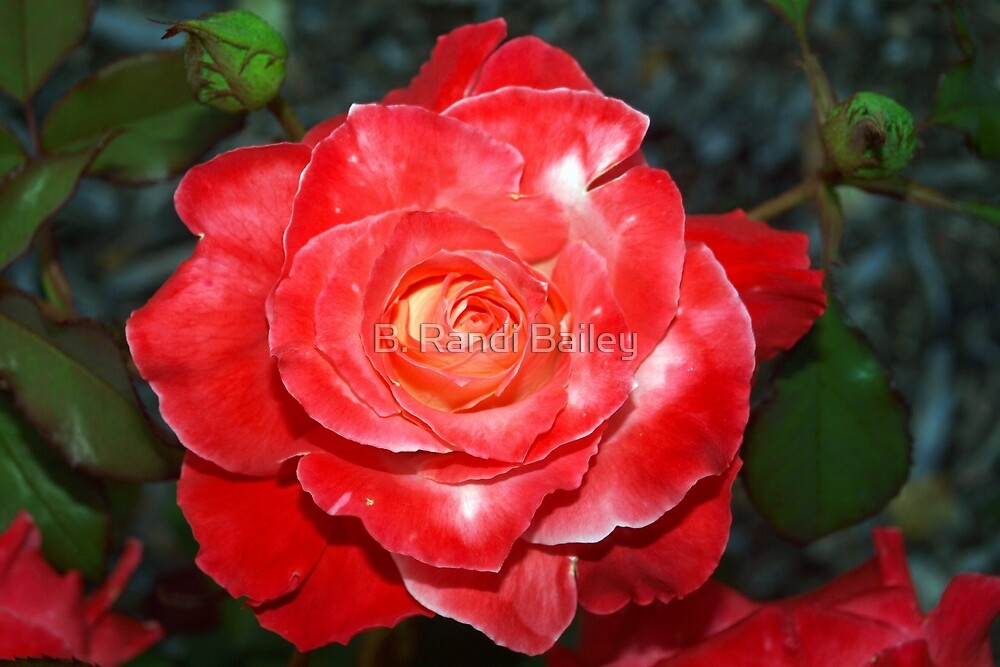 Like a carved rose candle by ♥⊱ B. Randi Bailey