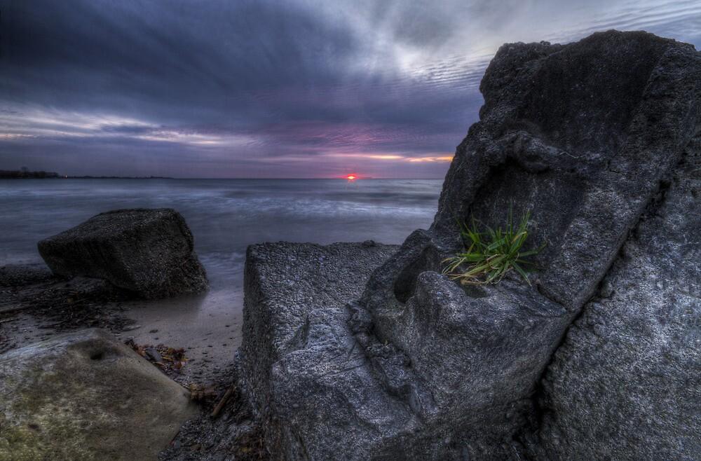 Purple Rise by MarcRadford