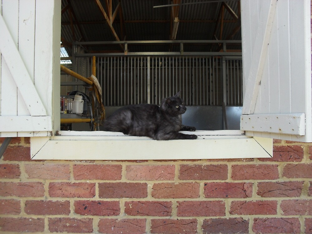 Tigga the Cat 8 by Jindia
