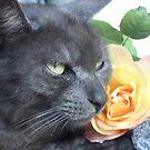 Tigga the cat 11 by Jindia