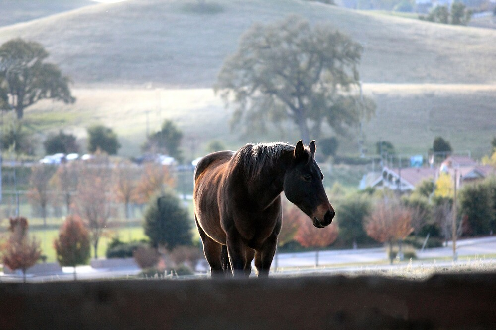 Gentle Ranch Horse by JessicaDianne