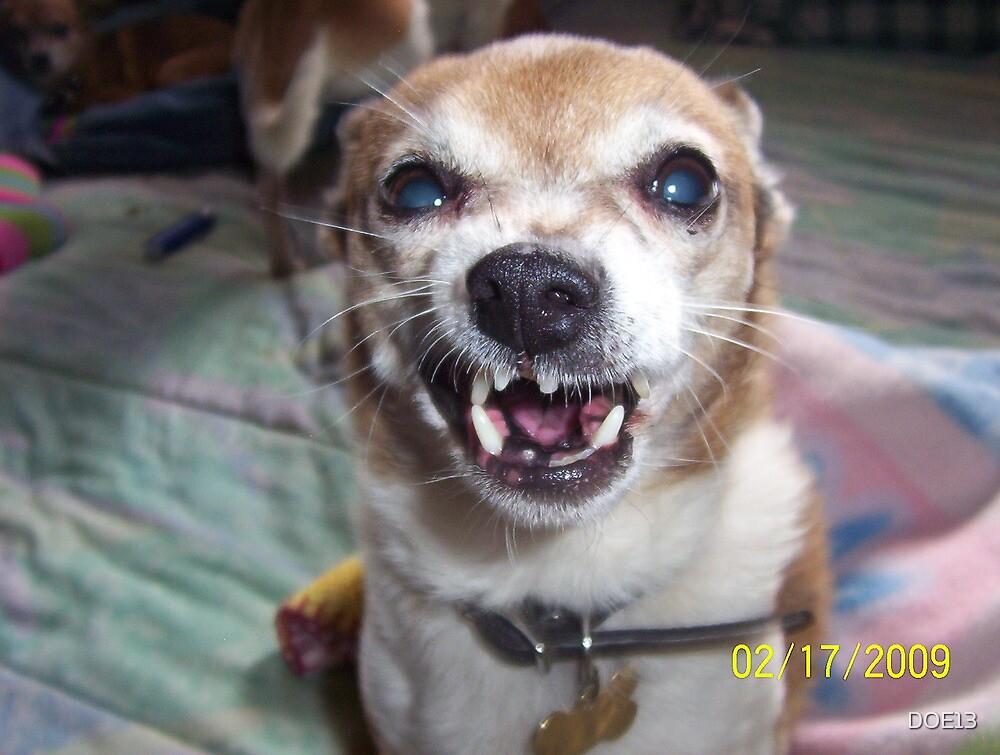 Crazy Old Dog Odis. by DOE13