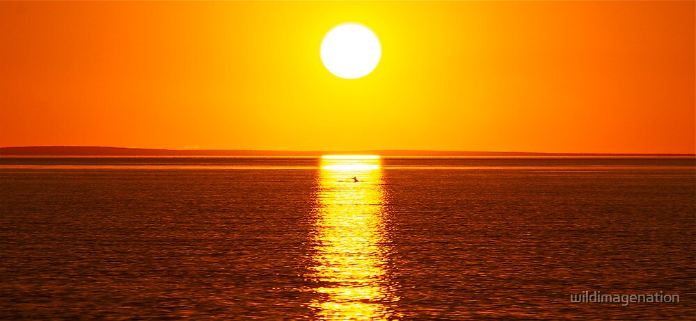 """Dolphin Sunset"" Shark Bay, Western Australia by wildimagenation"