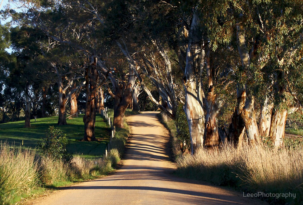 ~ Country Road ~ by LeeoPhotography