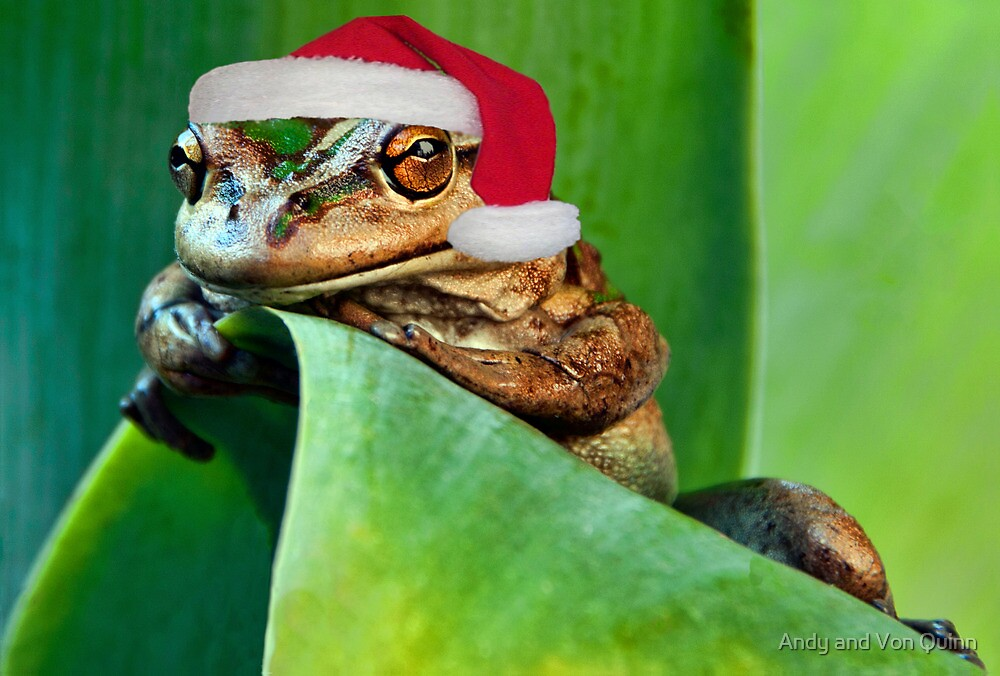 Xmas Frog by Andy and Von Quinn