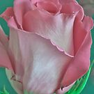 Pink And Aqua Rose Delight by Sandra Foster