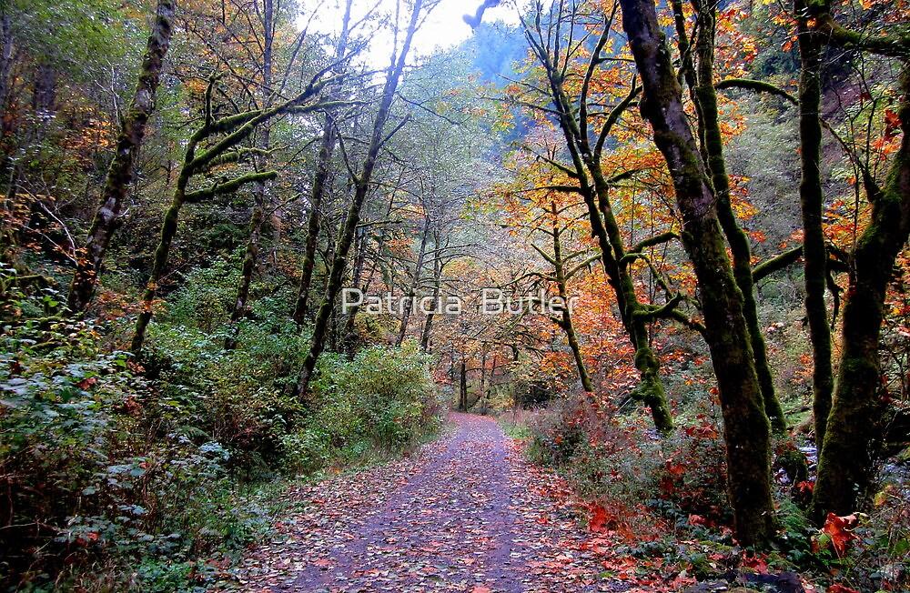 Autumn Walk by Patricia  Butler