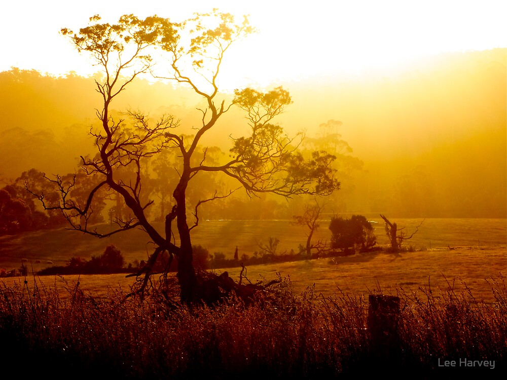 Golden Rays flowing from the Tasmanian Sun by Lee Harvey