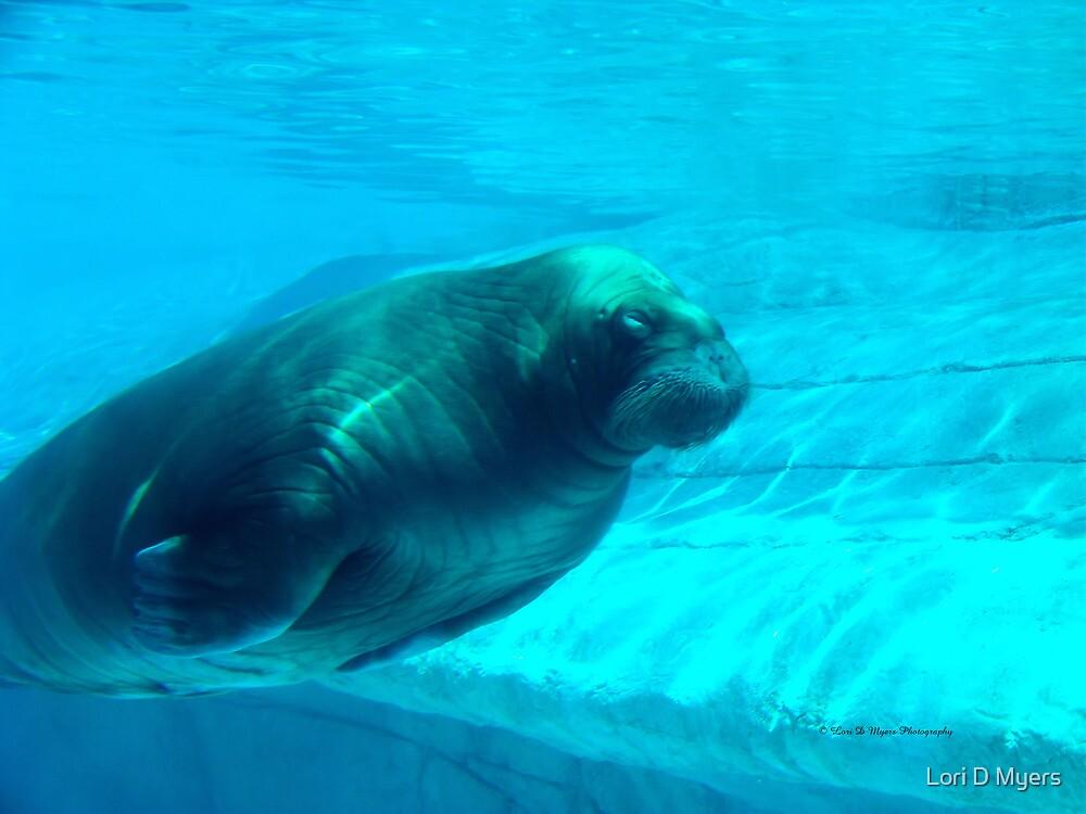 Walrus by Lori D Myers