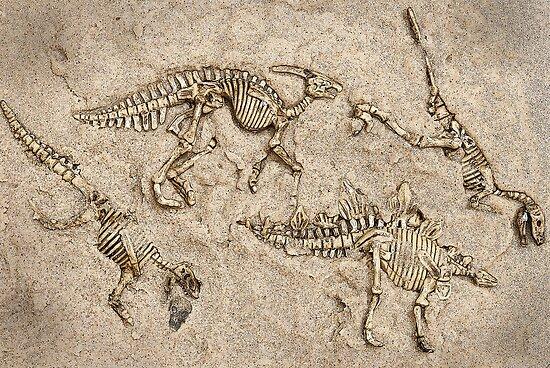 For dinosaur excavations for matures amusing idea
