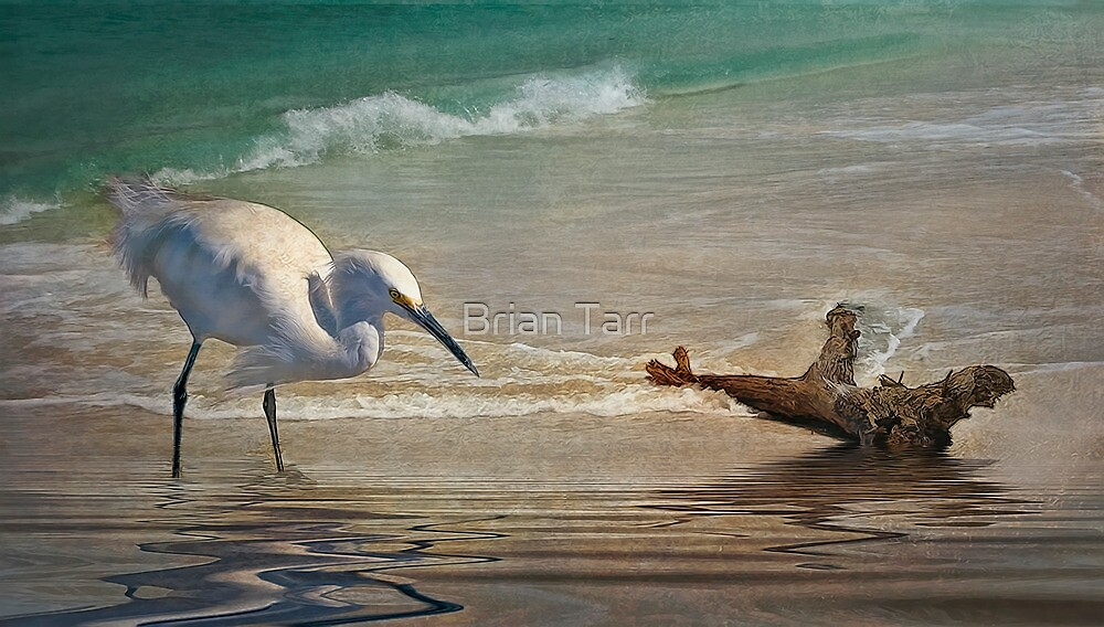 Snowy Egret and Driftwood by Brian Tarr