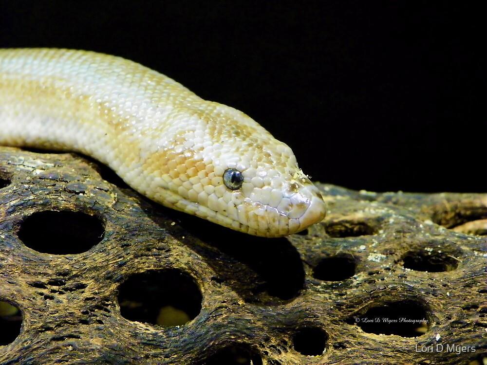 Snake by Lori D Myers