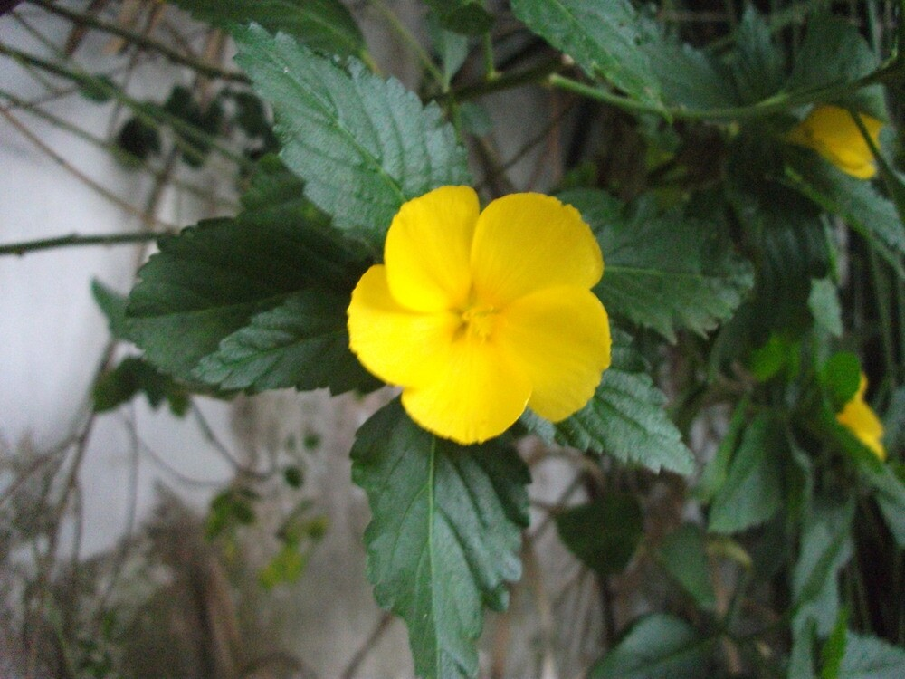 yellow flower by lucycat