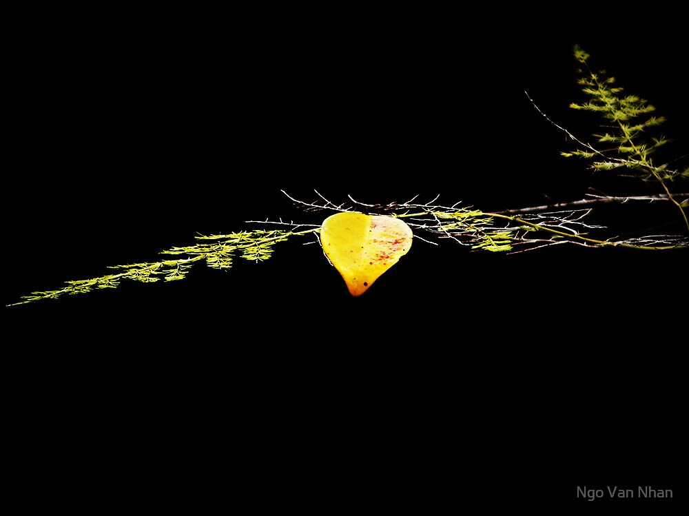 Lonely leaf left alone by Van Nhan Ngo