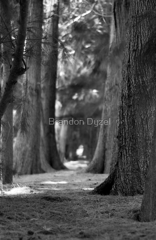 Pathway by Brandon Dyzel