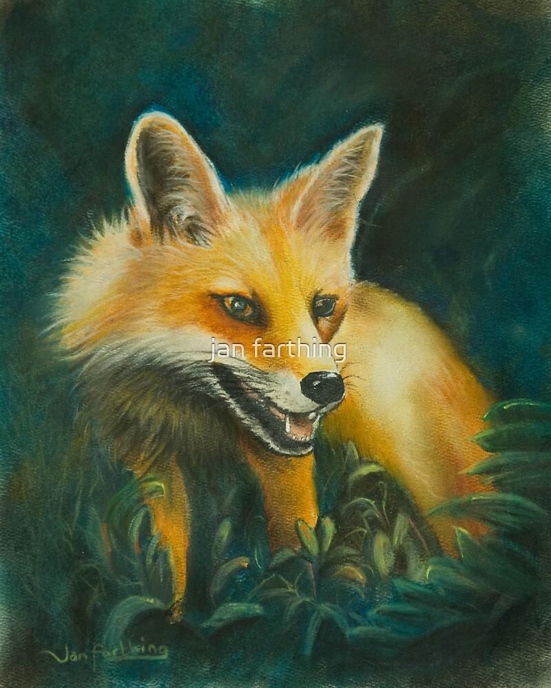 Fox. by jan farthing