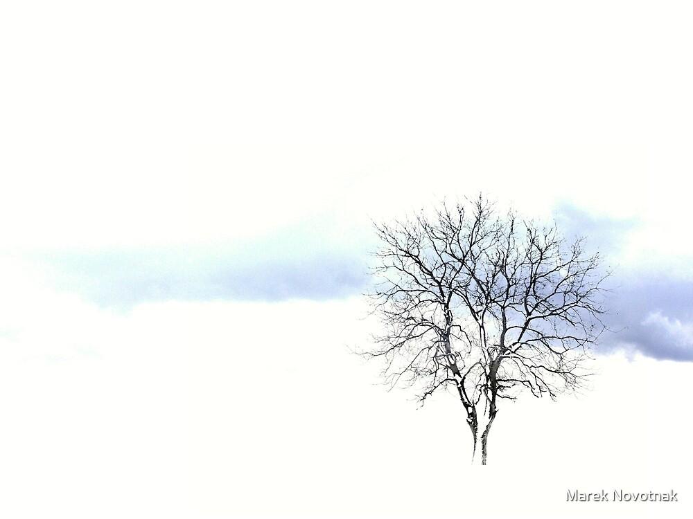 Winter day by Marek Novotnak