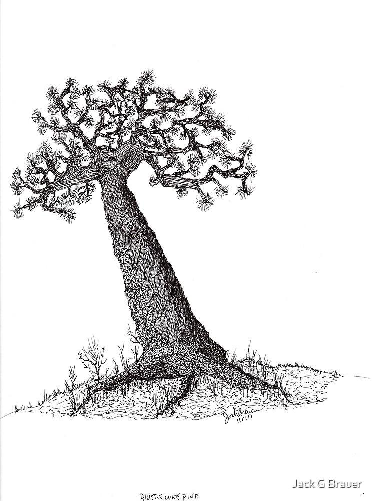 Bristle Cone Pine Tree by Jack G Brauer