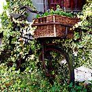 Ivy's Bike by mikebov