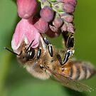 Hanging Honey Bee by Gert Lavsen