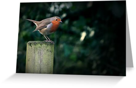 Robin on a Perch by HollyRuthven