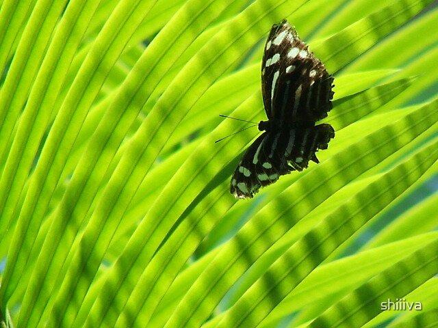 Butterfly by shiiiva