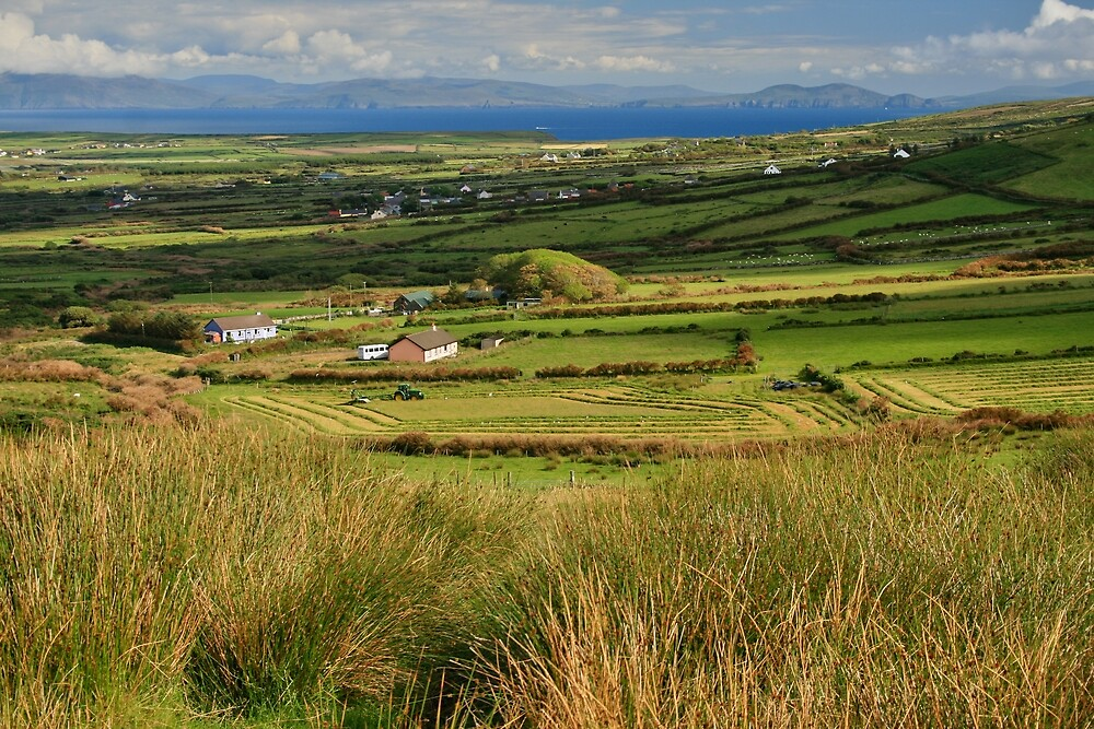 Silage being cut outside Dingle, Co Kerry by John  Carey