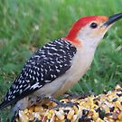 Woodpecker by astrochuck