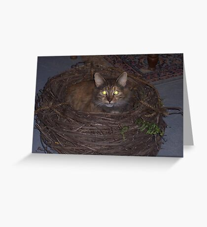 Cat's Nest Greeting Card