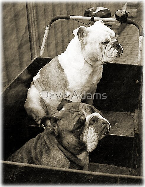 Dam Dogs by Dave Adams