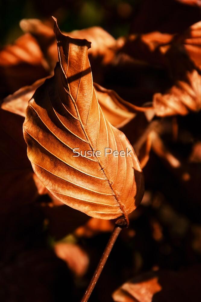 Beech Leaves In Autumn by Susie Peek